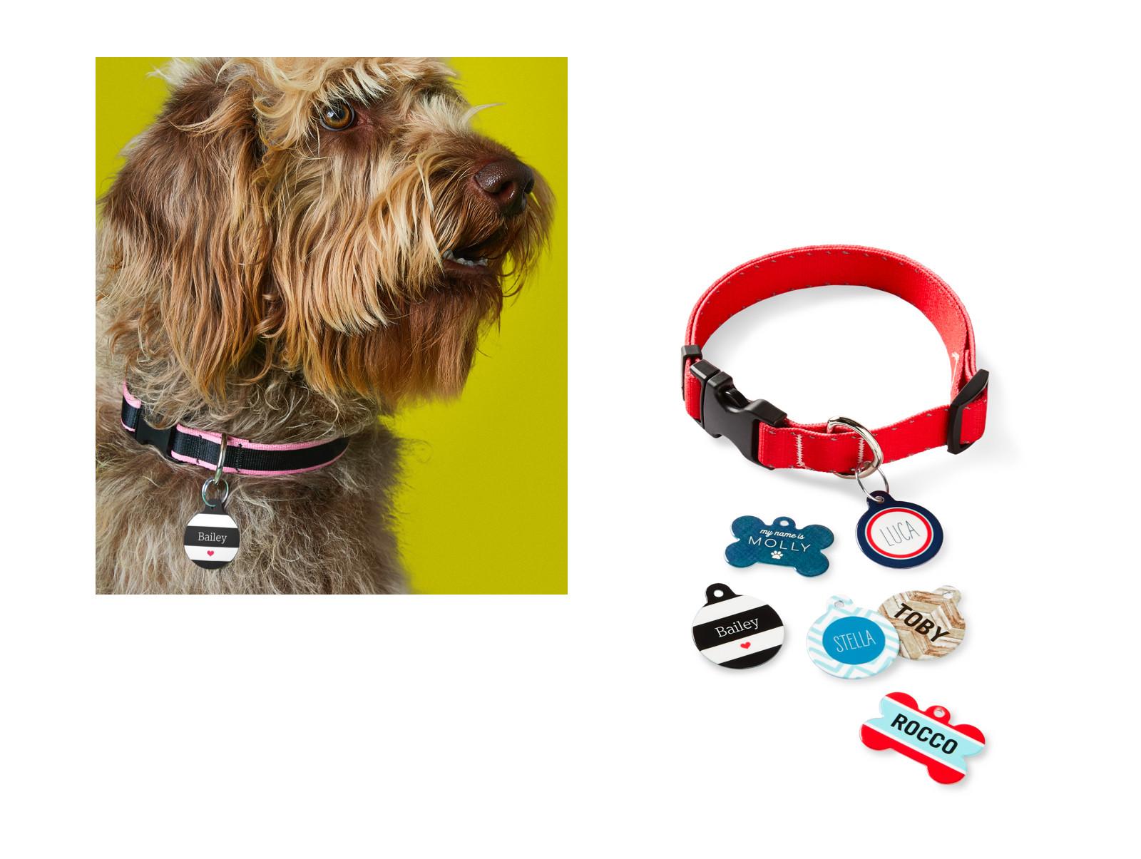 Dog lead leash  The Bailey dog lead